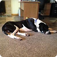 Adopt A Pet :: Zeus - Springfield, IL