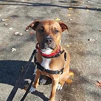 Adopt A Pet :: Penny - Berea, OH