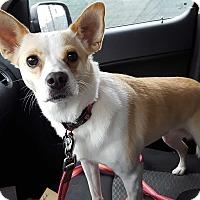 Adopt A Pet :: Lady - Aurora, IL
