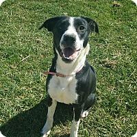Adopt A Pet :: Sammy - Moberly, MO