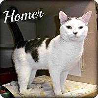 Adopt A Pet :: Homer - Ridgeland, SC