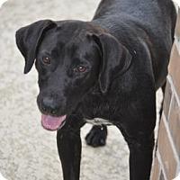 Adopt A Pet :: Tessie - Santa Fe, TX