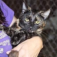 Adopt A Pet :: Rachel - Columbia, TN