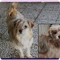 """Adopt A Pet :: Chesmak (""""Wink"""") - Guelph, ON"""