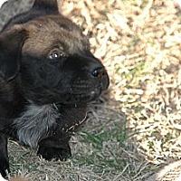 Adopt A Pet :: Kate Jackson - Plano, TX
