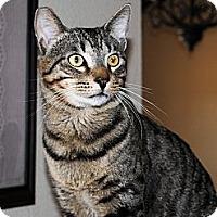 Adopt A Pet :: Rolo - Palmdale, CA
