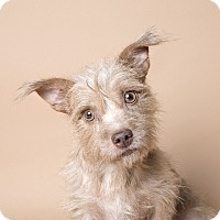 Adopt A Pet :: Sweet Sports - Madison, NJ