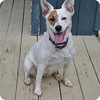 Adopt A Pet :: Sydney - Lebanon, ME