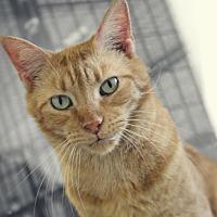 Adopt A Pet :: Ziggy - South Amana, IA