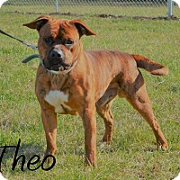 Adopt A Pet :: Theo - DuQuoin, IL