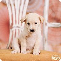 Adopt A Pet :: Paula Deen - Portland, OR