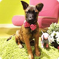 Adopt A Pet :: Gretta - Castro Valley, CA