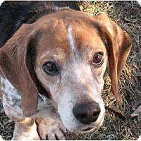 Adopt A Pet :: Tom - Blairstown, NJ