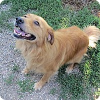 Adopt A Pet :: Sasha - Geneseo, IL