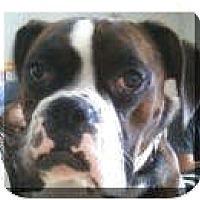 Adopt A Pet :: Captain - Sunderland, MA