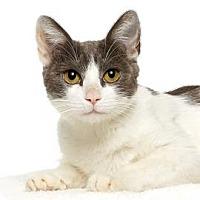 Adopt A Pet :: Jersey - Santa Monica, CA