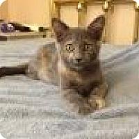 Adopt A Pet :: Delilah - Chandler, AZ