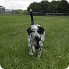 Adopt A Pet :: Axel