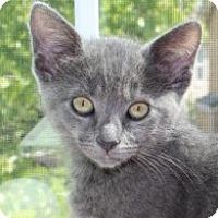 Adopt A Pet :: Victoria - Irvine, CA