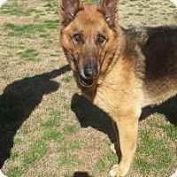 Adopt A Pet :: Dexter - Gainesville, VA