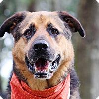 Adopt A Pet :: Mister - Odessa, FL