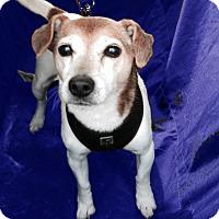 Adopt A Pet :: Lola Too - San Francisco, CA