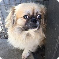 Adopt A Pet :: cody - SO CALIF, CA