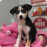 Adopt A Pet :: Mist - Groton, MA
