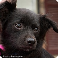 Adopt A Pet :: Jesse - Daleville, AL