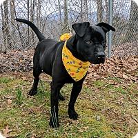 Adopt A Pet :: Henry - Sylva, NC