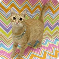 Adopt A Pet :: SAMMIE - Lexington, NC