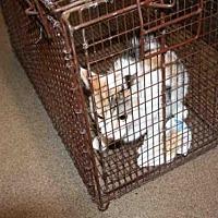 Adopt A Pet :: DEJA - Aurora, IL
