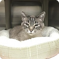 Adopt A Pet :: Lois - Boise, ID