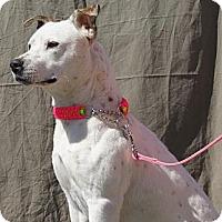 Adopt A Pet :: Molly - Costa Mesa, CA