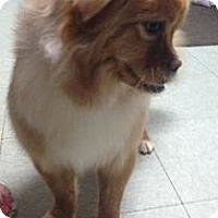 Adopt A Pet :: Sadie - Oceanside, CA