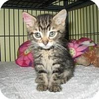 Adopt A Pet :: Mia - Shelton, WA