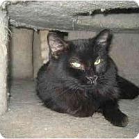 Adopt A Pet :: Mama Mia - Lombard, IL
