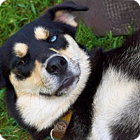 Adopt A Pet :: Isis - Arden, NC