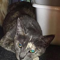 Adopt A Pet :: Natasha - Chino, CA