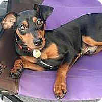 Adopt A Pet :: Ryder - McDonough, GA