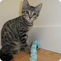 Adopt A Pet :: Finn - Milwaukee, WI