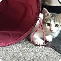 Adopt A Pet :: Gwenie - Sedalia, MO