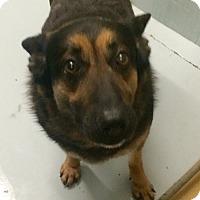 Adopt A Pet :: Jessica - Oak Ridge, NJ
