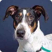 Adopt A Pet :: Jubilee - Sudbury, MA