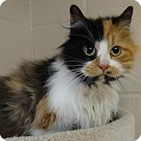 Adopt A Pet :: Emma - Troy, OH