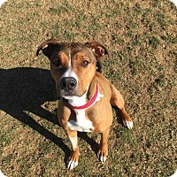 Adopt A Pet :: Lucy - Chambersburg, PA