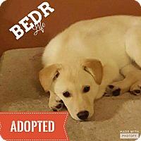 Adopt A Pet :: Liberty - Regina, SK