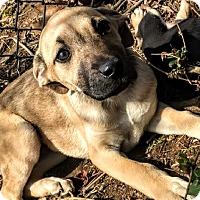 Adopt A Pet :: Mila - Baltimore, MD