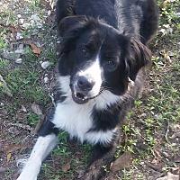 Adopt A Pet :: Tip - Houston, TX