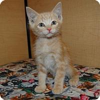Adopt A Pet :: Rodger - Whittier, CA